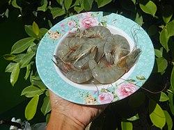 2884Whiteleg shrimp in the Philippines textures 04.jpg