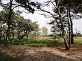 2920 Kalmthout, Belgium - panoramio.jpg
