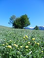38030 Varena, Province of Trento, Italy - panoramio (2).jpg