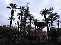 38400 Puerto de la Cruz, Santa Cruz de Tenerife, Spain - panoramio (11).jpg