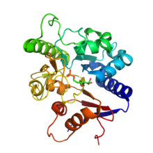 6-phosphogluconolactonase complexed with 6-phosphogluconic acid. PDB- 3E7F.png