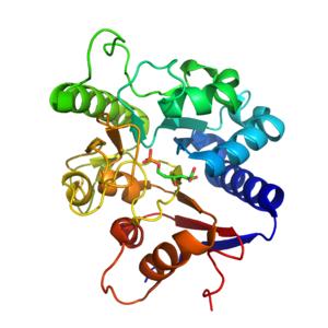 6-phosphogluconolactonase - Image: 6 phosphogluconolacton ase complexed with 6 phosphogluconic acid. PDB 3E7F
