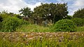 83230 Bormes-les-Mimosas, France - panoramio (15).jpg