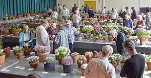 Alpine Garden Society - AGS Midland Show 2011