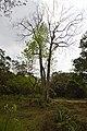 AJC Bose Indian Botanic Garden - Howrah 2018-04-01 2396.JPG
