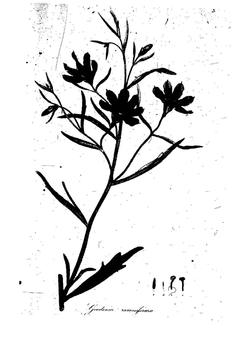 Free Coloring Pages Of Botanical