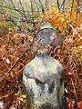 A beaver-cut tree (6555932325).jpg