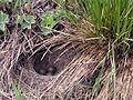 A bird's nest.JPG