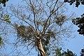 A canvas Tree Canvof Saatchori National Park, Hobigonj, Sylhet, Bangladesh.jpg