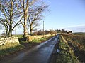 A country road at Hoselaw - geograph.org.uk - 288918.jpg