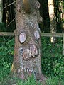 A face in the tree - geograph.org.uk - 845882.jpg