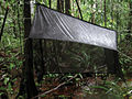 A malaise trap installed in a flooded forest of French Guiana.jpeg