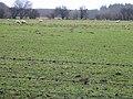 A sheep field - geograph.org.uk - 336336.jpg
