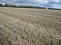 "Abgeerntet - ""Stoppelfeld"" - panoramio.jpg"