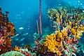Abrolhos Marine National ParkRobertoCostaPinto04.jpg