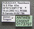 Acromyrmex lundii casent0173797 label 1.jpg