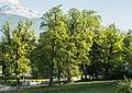 Ahornbäume beim Kloster St. Martin.jpg