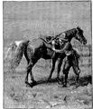 Aimard - Les Chasseurs d'abeilles, 1893, illust page 101.png