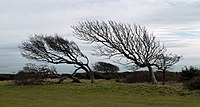 Air Tree - panoramio.jpg