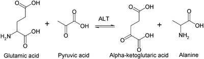 Alanine transaminase reaction.PNG