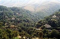 Albania forest Saranda Gjirokastra.jpg