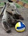 Albanian bear.jpg