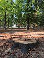 Alberi del Parco Ducale.jpg