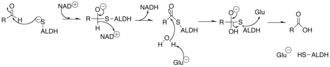 Aldehyde dehydrogenase - Mechanism of Aldehyde Dehydrogenase