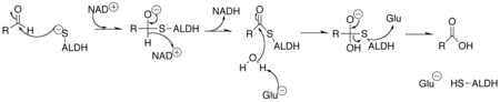 Aldehyde dehydrogenase mechanism.png