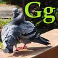 Alfabet zwierząt - literka G.png