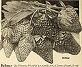 Allen's book of berries (1932) (17951779701).jpg
