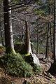 Altausseer See 78933 2014-11-15.JPG