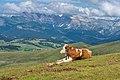 Alto Adige.jpg