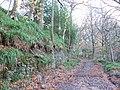 Alum Scar wood - panoramio (3).jpg