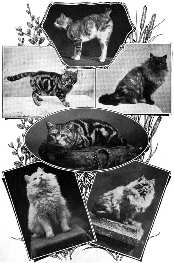 Americana 1920 Cat Domestic (1).jpg