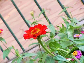An unfocused flower.jpg