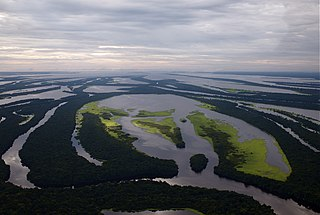 Central Amazon Ecological Corridor