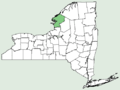 Anemone multifida var multifida NY-dist-map.png