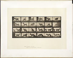 Animal locomotion. Plate 662 (Boston Public Library).jpg