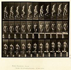 Animal locomotion. Plate 88 (Boston Public Library).jpg