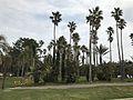 Aoshima Subtropical Botanical Garden 10.jpg