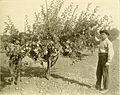 Apple growing in the Pacific Northwest; a condensation of lectures, experiments and discussions (1911) (14597270260).jpg