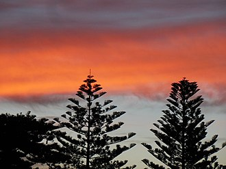 Henley Beach, South Australia - Image: Araucaria trees at sunset in Henley Beach