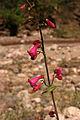 Aravaipa Canyon Wilderness (9415020440).jpg