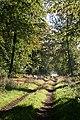 Ardovie Wood - geograph.org.uk - 575952.jpg