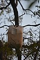 Artificial nest box for birds by Raju Kasambe DSC 8153 (2) 07.jpg
