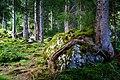 Austria - eratic block in the wood 2018 (43544166674).jpg