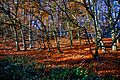 Autum colours, Reigate (8207211415).jpg