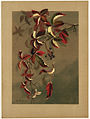 Autumn Leaves with Black Berries (Boston Public Library).jpg