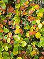 Autumn Mosaic - geograph.org.uk - 594644.jpg